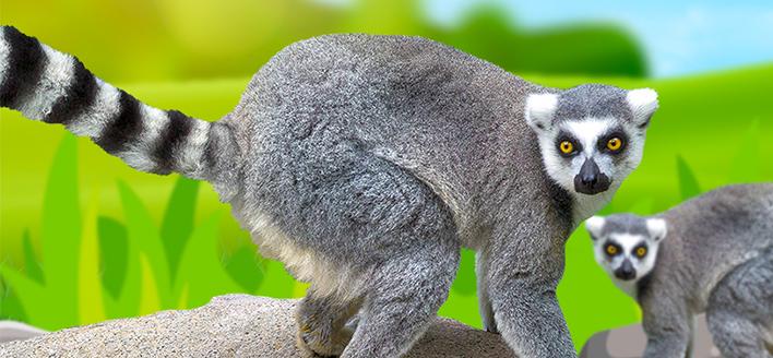 Giardino dei Lemuri